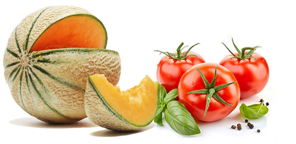Exportation de fruits et légumes frais Exportation de fruits primeurs Tunisie Primeur Geothermique exportation de fruits primeurs et legumes frais fruits et legumes bio tunisie production tomate et melon d'eau chaude géothermique